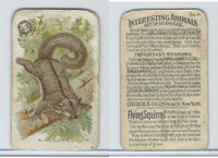 J10, Church & Dwight, Interesting Animals, 1897, #41 Flying Squirrel