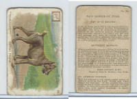 J14, Church & Dwight, New Series of Dogs, 1910, #29 German Pincher