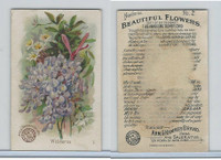 J16, Church & Dwight, Beautiful Flowers, 1895, #2 Wisteria