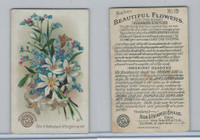 J16, Church & Dwight, Beautiful Flowers, 1895, #19 Star of Bethlehem