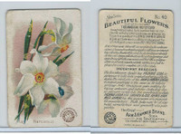J16, Church & Dwight, Beautiful Flowers, 1895, #40 Narcissus