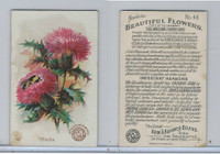 J16, Church & Dwight, Beautiful Flowers, 1895, #48 Thistle