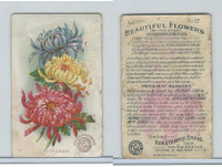J16, Church & Dwight, Beautiful Flowers, 1895, #57 Chrysanthemum
