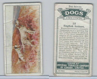 C8 Imperial Tobacco Company, Dog 2nd Series, 1920's, #29 English Setters