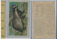 K1 Arbuckle Coffee, Animals, 1890, #25 Badger
