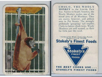 F333 Jewel, Animal Of The Week, 1956, Cholo, Wooly Monkey