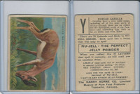 FC1, Harry Horne Co, Nu-Jell, Animals And Birds, 1925, Dorcus Gazelle