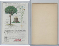 F213-3 Coca Cola, Nature Study, Trees & Plants, 1920's, #1 Parts of Trees