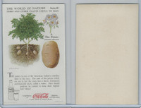F213-3 Coca Cola, Nature Study, Trees & Plants, 1920's, #4 Potato