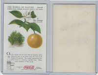 F213-3 Coca Cola, Nature Study, Trees & Plants, 1920's, #8 Orange