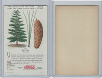 F213-3 Coca Cola, Nature Study, Trees & Plants, 1920's, #11 Pine