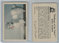 F279-5 Quaker, Challenge of the Yukon, Dog Cards, 1950, Mini Poodle