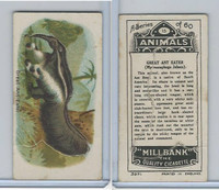 C40 British American Tobacco, Animals, 1916, #15 Great Ant Eater