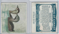 C2 Imperial Tobacco, Birds Of Canada, 1920's, #1 Pied-Billed Grebe