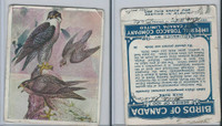 C2 Imperial Tobacco, Birds Of Canada, 1920's, #26 Duck Hawk