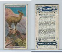 P72-115 Player, Natural History, 1924, #3 Klipspringer Antelope