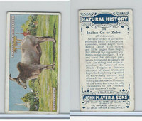 P72-115 Player, Natural History, 1924, #34 Indian Ox or Zebu
