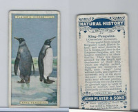 P72-115 Player, Natural History, 1924, #37 King-Penguins