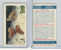 F450-6 Brook Bond, Butterflies North America, 1965, #14 Compton Tortoise Shell