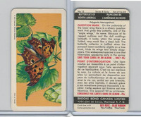 FC34-9 Brook Bond, Butterflies North America, 1965, #12 Question Mark