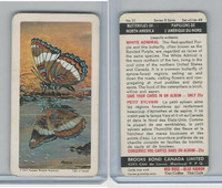 FC34-9 Brook Bond, Butterflies North America, 1965, #21 White Admiral
