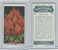 C13 Imperial Tobacco, Flower Culture, 1925, #14 Celosia