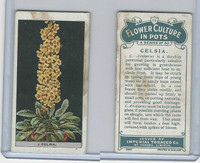 C13 Imperial Tobacco, Flower Culture, 1925, #15 Celsia