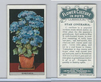 C13 Imperial Tobacco, Flower Culture, 1925, #17 Star Cineraria