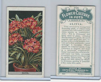 C13 Imperial Tobacco, Flower Culture, 1925, #18 Clivia
