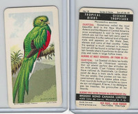FC34-8 Brooke Bond, Tropical Birds, 1964, #18 Quetzal