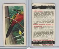 FC34-8 Brooke Bond, Tropical Birds, 1964, #25 Great Jacamar