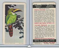 FC34-8 Brooke Bond, Tropical Birds, 1964, #26 Emerald Toucanet