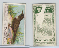 O2-95 Ogdens, British Birds, 1905, #41 Ring-Ouzel