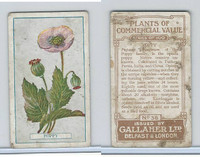 G12-56 Gallaher, Plants Commercial Value, 1917, #38 Poppy
