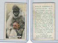 G12-102 Gallaher, Wild Animals, 1937, #13 Capped Langur and Baby