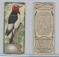 E225-2 Sen Sen Chiclet, Accurate Bird Studies, 1930, Red H. Wood Pecker