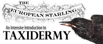 starling-banner.jpg