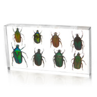 Flower Chafers in Resin