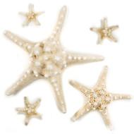 Knobby Star