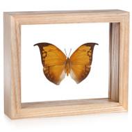Leafwing Butterfly - Anaea archidona - Topside