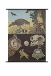Birds of Prey Zoology Poster
