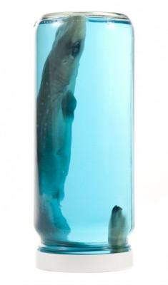 Shark in a Jar