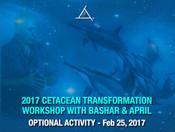 Cetacean Transformation OPTIONAL ACTIVITY -  Feb 25, 2017