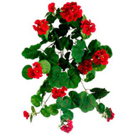GERANIUM HANGING BUSH RED 23""
