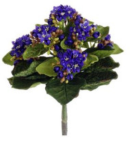 KALANCHOE BUSH MINI PURPLE 9""