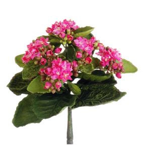 Kalanchoe bush mini 9 ro cake supplies for less for Allstate floral and craft