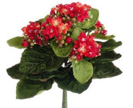 "KALANCHOE BUSH MINI 9"" RED"