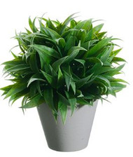 "RUSCUS BALL TOPIARY 9"" GR"
