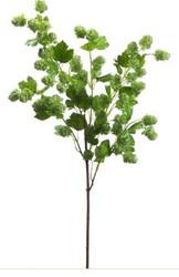 HOPS SPRAY GREEN 40
