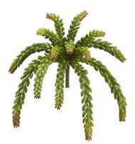 "SEDUM SOFT GREEN PLANT 12.5"""
